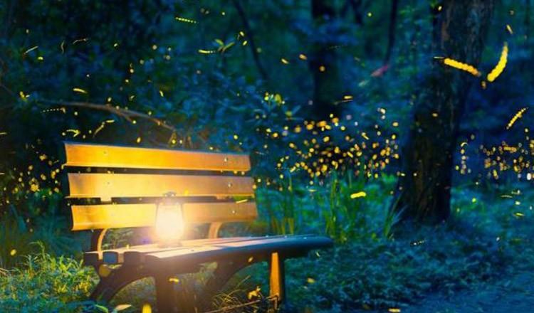 """""""Apocalipsa insectelor"""". Licuricii, pe cale de dispariție"""