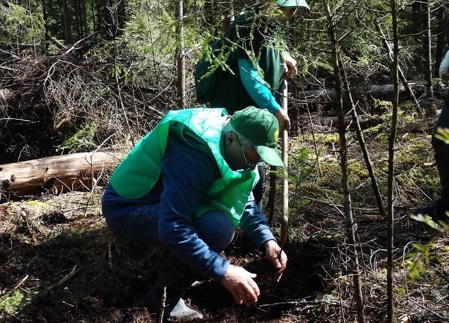 Aproape 16 milioane de puieţi forestieri au fost plantaţi în România, pe durata Stării de urgenţă