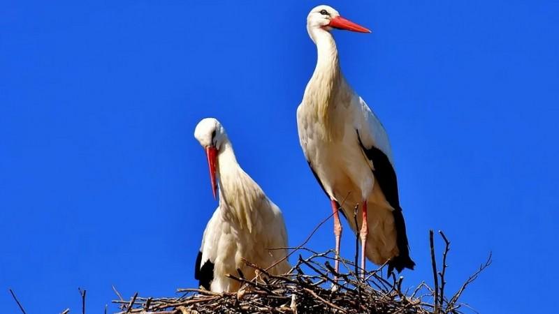 """""""Păsările conectează lumea noastră"""". Astăzi este Ziua mondială a păsărilor migratoare"""