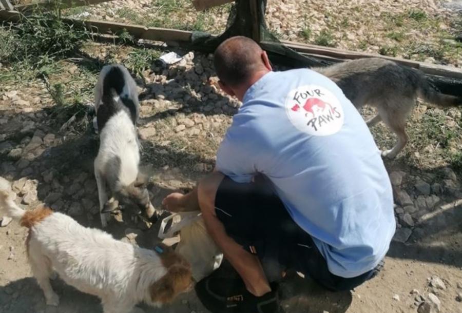 Doi medici veterinari din România au plecat să salveze animalele rănite în explozia din Beirut