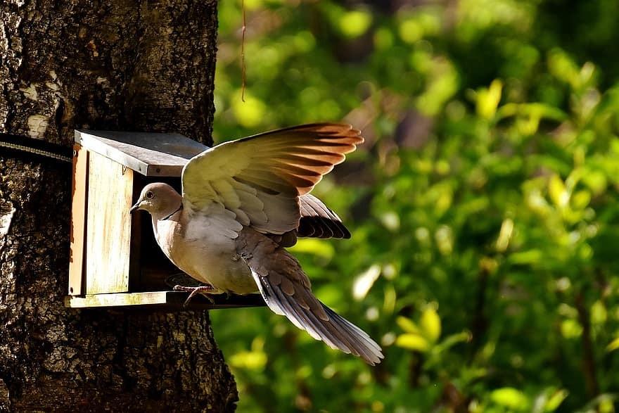 Vânătoare oprită la 36 de specii de păsări sălbatice în sezonul 2020-2021