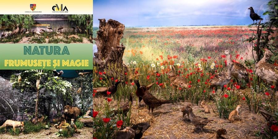 Biodiversitatea fascinantă a județului Arad, într-un nou concept expozițional la Muzeul de Științe ale Naturii