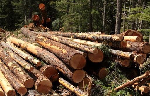 După 5 ani de dezvoltare, implementarea SUMAL 2.0 aduce haos în sectorul forestier