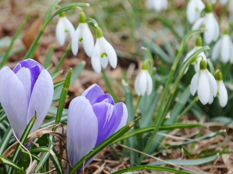 Prognoza meteo până pe 14 martie. Când vin ploile și frigul