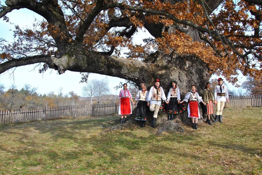 Cel mai bătrân copac din România are peste 900 de ani