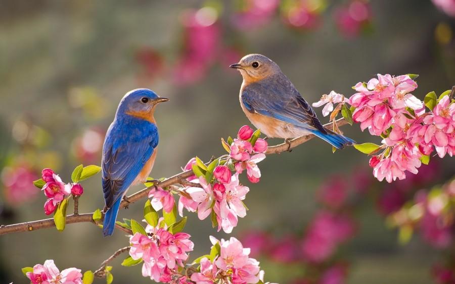 Astăzi începe Primăvara astronomică. Moment de armonie și echilibru, în care ziua și noaptea sunt într-o perfectă balanță