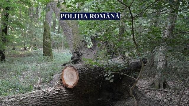 Bărbat din Ineu, prins în trafic cu lemne furate și beat criță