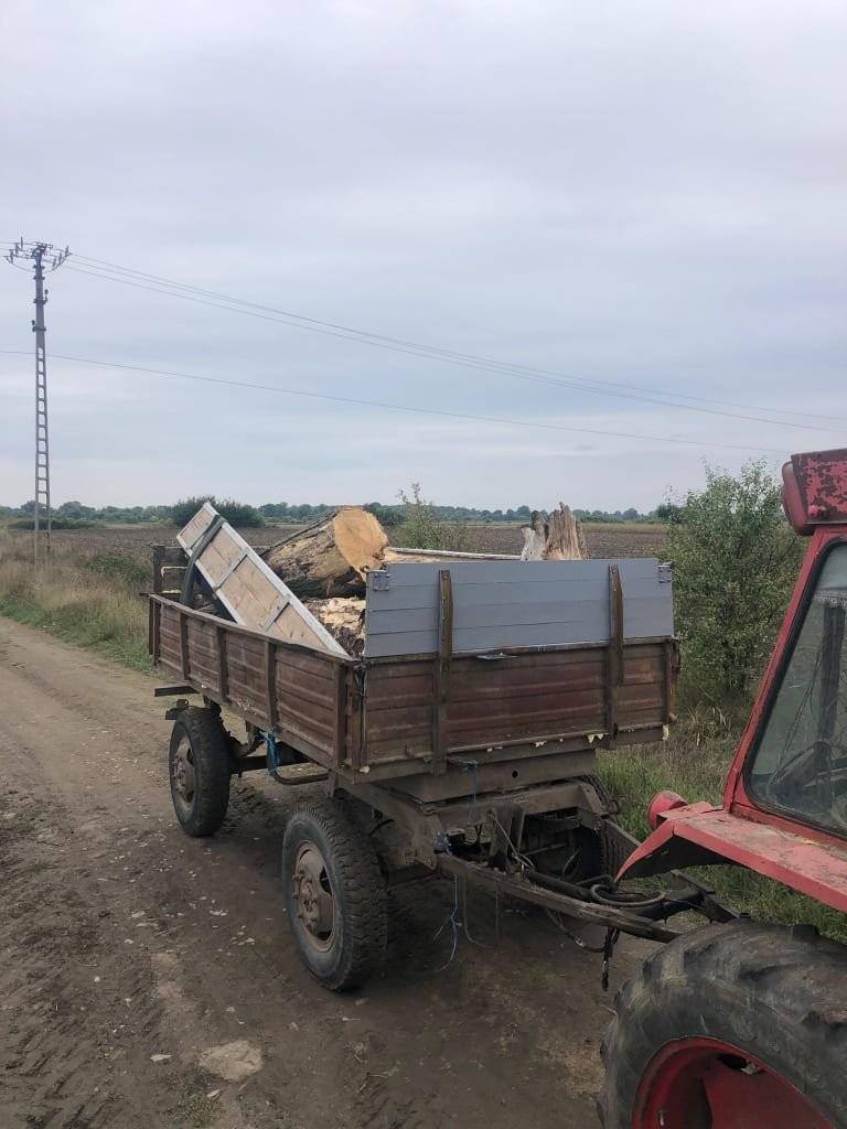Hoţii de lemne dau atacul până şi în Parcul Natural Lunca Mureşului