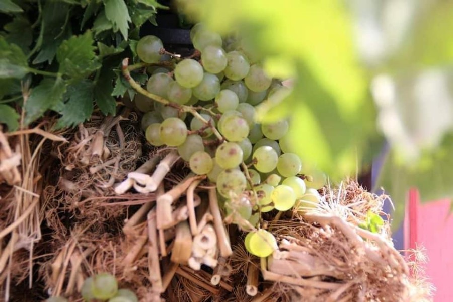 Expoziţie de vinuri arădene în holul Consiliului Judeţean